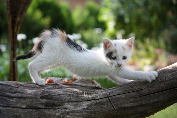 Фото №2 - В мире животных