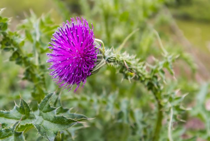 Фото №5 - Зеленые часы и барометры: растения, которые можно использовать как научные приборы