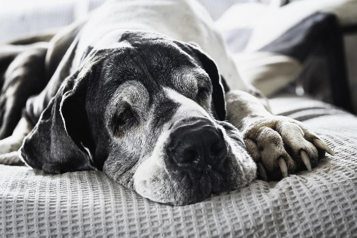 Фото №1 - 5 пород собак-долгожителей и 5 самых недолговечных