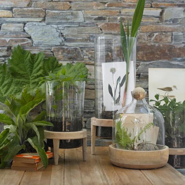 Фото №7 - Растения в интерьере: 6 идей для создания мини-сада