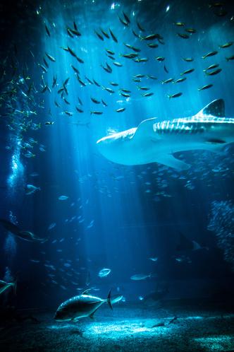 Фото №2 - К чему снится рыба: что говорят сонники и психологи