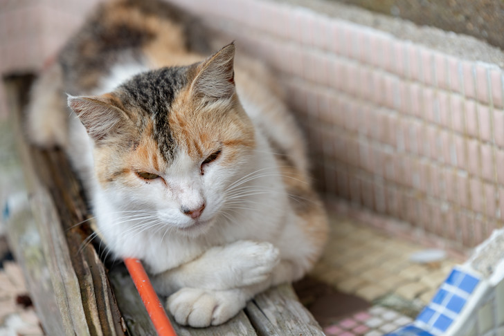 Фото №1 - 10 поз, в которых спит твой кот, и что они значат