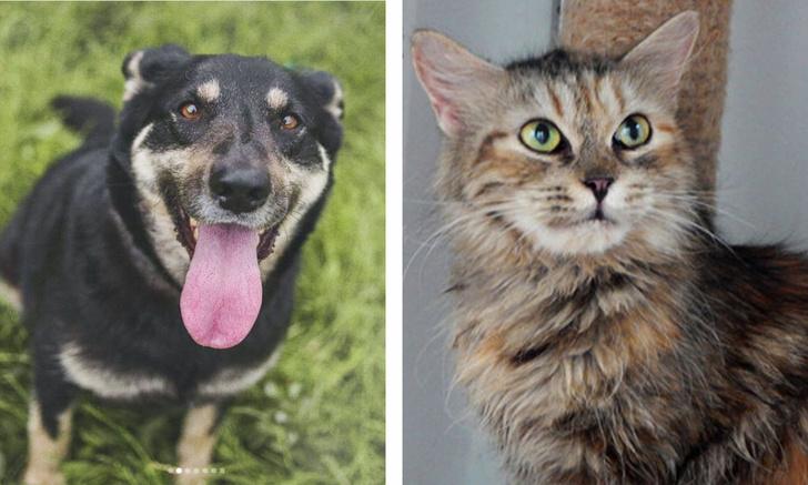 Фото №1 - Котопёс недели: собака Лакрица и кошка Тирамису