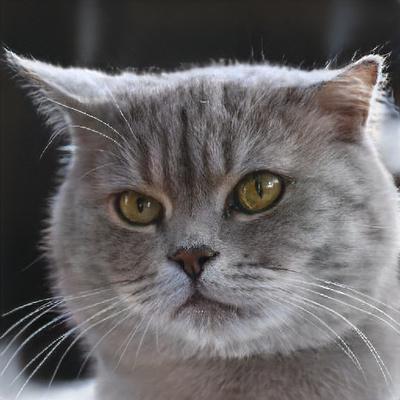 Фото №2 - Тест: Нейросеть научилась генерировать котиков. Сможешь отличить их от настоящих?