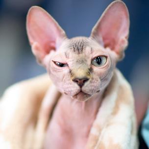 Фото №8 - Тест: Выбери котика, а мы скажем, как ты проведешь выходные