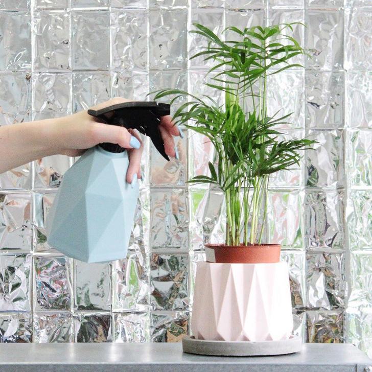 Фото №5 - Всё об увлажнении растений: советы эксперта