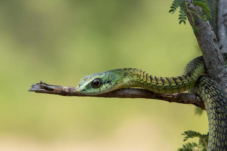 Фото №12 - Работа убивает: 5 герпетологов, которые не пережили укус змеи