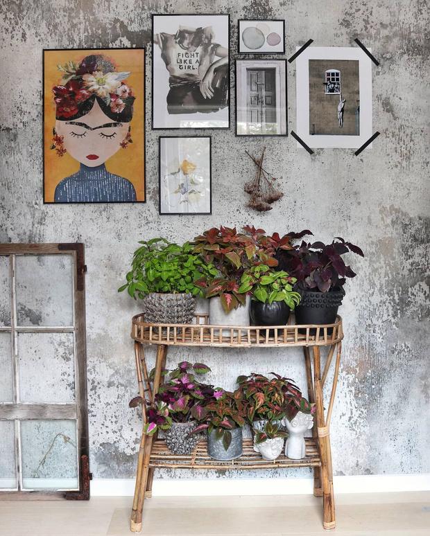 Фото №1 - Растения в интерьере: 6 идей для создания мини-сада