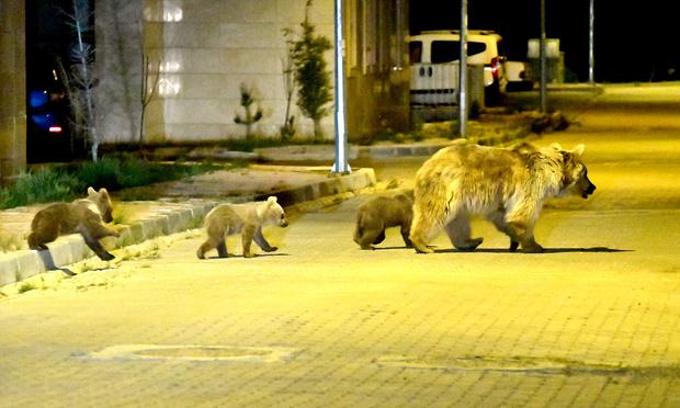 Фото №11 - Эти забавные халявщики: 15 животных, которые сделали ставку на человека и не прогадали