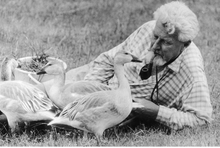 Фото №6 - Путешествие Конрада с дикими гусями