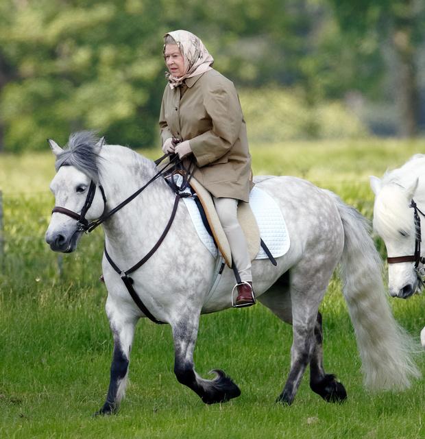Фото №3 - Аристократичное хобби принцев Джорджа, Луи и принцессы Шарлотты