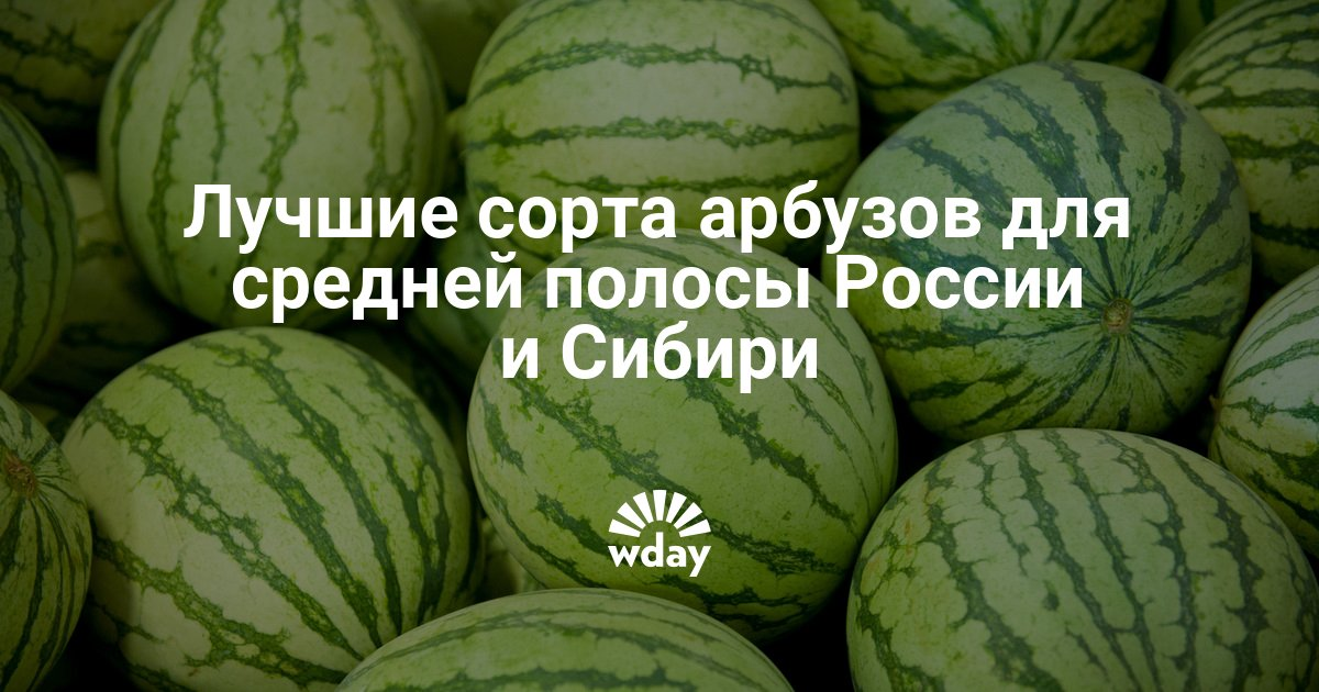 Сорта арбузов — www.wday.ru