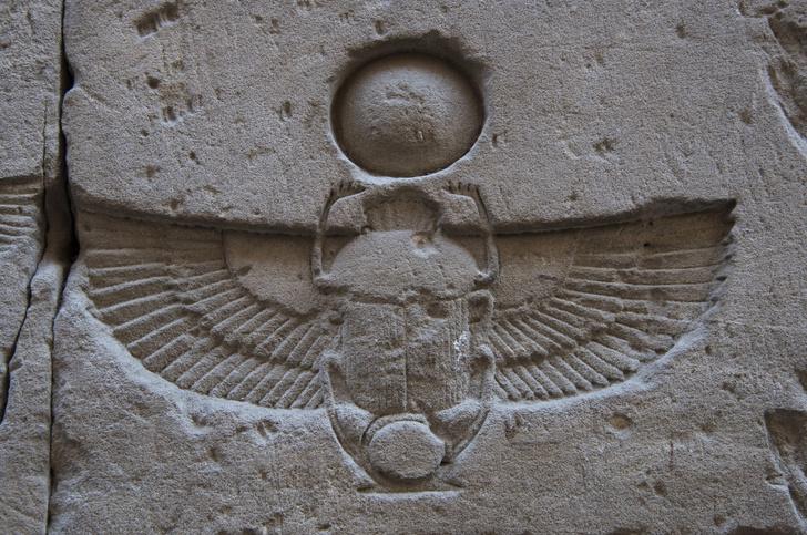 Фото №1 - Живые боги: каким животным поклоняются люди?