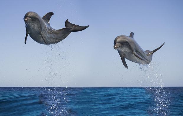Фото №1 - Дельфин: к чему снятся дельфины в море, сонник