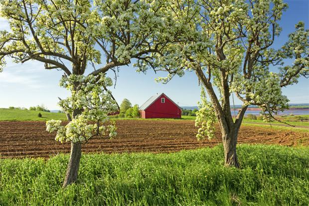 Фото №1 - Советы эксперта: приводим в порядок плодовые деревья