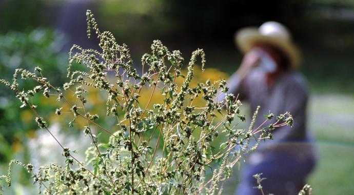 «Цветение лишь триггер»: психологические причины сезонной аллергии