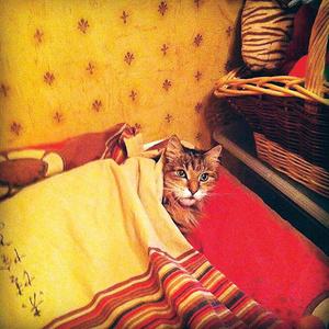 Фото №9 - Кто сказал «мяу»: Варум, Чиповская, Свиридова о любимых кошках