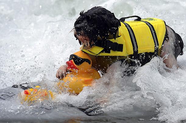 Фото №6 - Отпуск на море: как это делают собаки