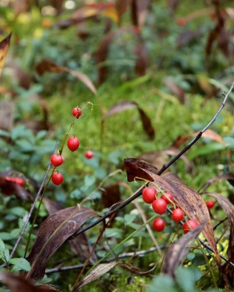 ядовитые ягоды список с фото