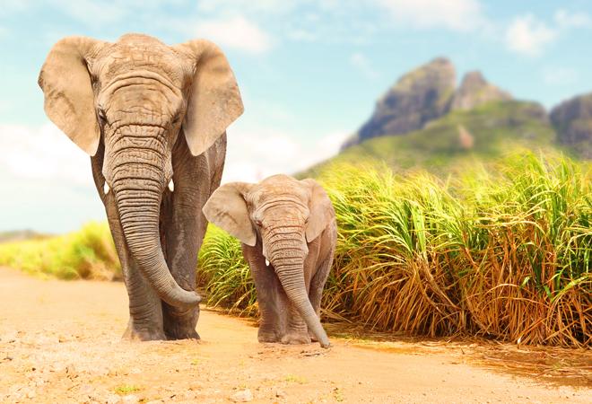 Фото №4 - 28 фактов о животных, которые поднимут настроение