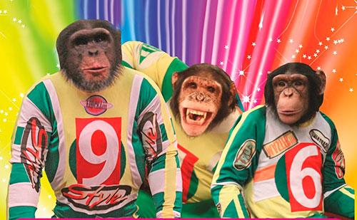 Фото №3 - Выходные в Рязани: праздник флота и премьера шоу шимпанзе