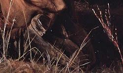 Фото №6 - Врать по-русски: 9 фактов об «Охотниках на привале»