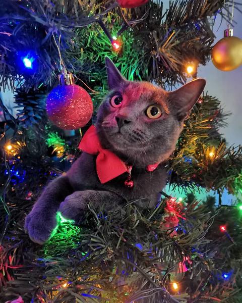 Фото №1 - Кошки против елок: 35 милейших попыток уничтожить Новый год