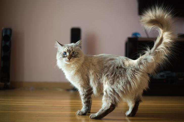 Фото №12 - Овну— мау, Раку— сфинкс: какая кошка подходит вам по знаку зодиака