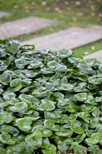 Фото №8 - Частный сад на Финском заливе по проекту бюро «Мох»
