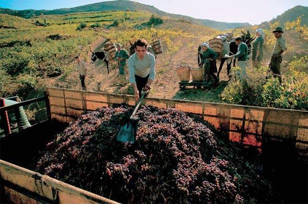 Фото №1 - Какое вино считается древнейшим?