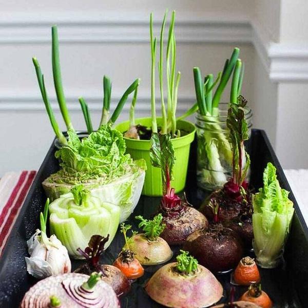 как вырастить зелень, как вырастить лук, как вырастить капусту, как вырастить картофель, как вырастить мяту, как вырастить имбирь