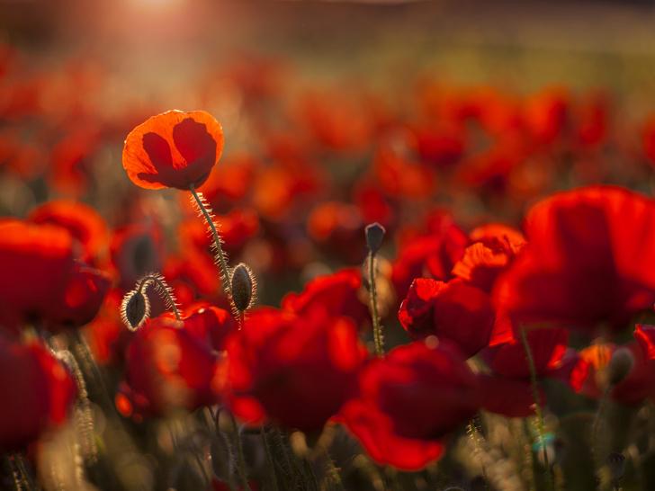 Фото №2 - Аромат дня: Flower by Kenzo EDT от KENZO