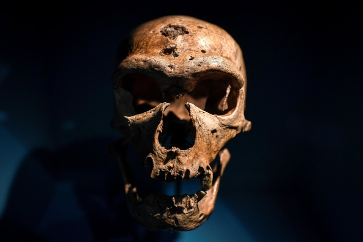 Фото №1 - Неандертальцы могли иметь те же группы крови, что и современные люди