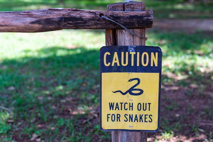 Фото №1 - Смотрим в оба: 5 самых агрессивных ядовитых змей
