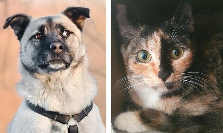 Фото №1 - Котопёс недели: кошка Ницца и пес Кузя