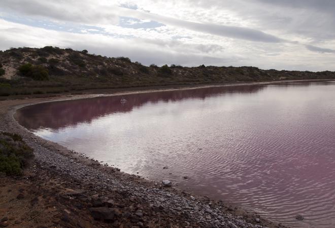 Розовое озеро фото
