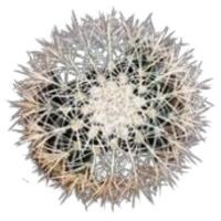 Фото №8 - Тест: Выбери кактус, и мы скажем, насколько ты колючая 🌵