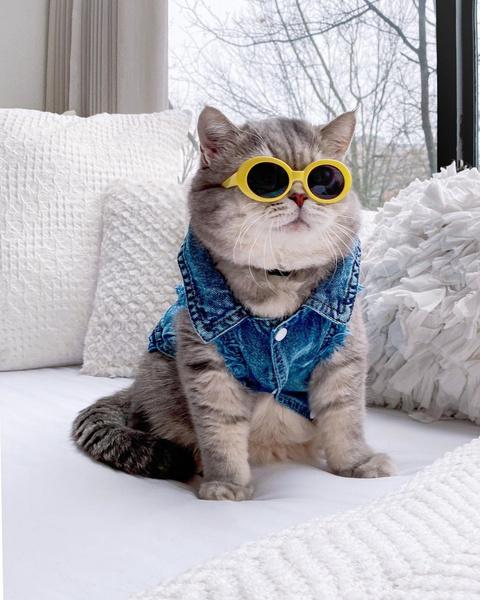 Фото №17 - Инста дня: Этот кот про моду знает больше, чем ты 😂