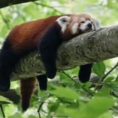 Занимательная зоология: сможете ли вы правильно назвать этих животных? [тест]