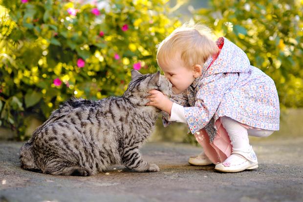Фото №1 - От кошки можно заразиться туберкулезом