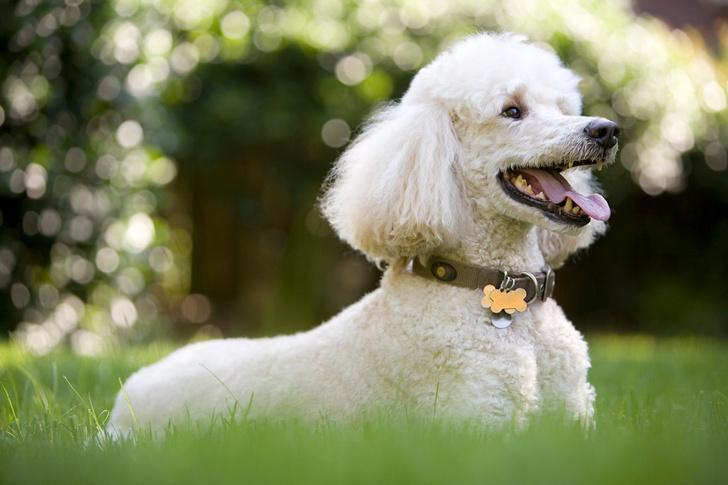 породы собак для семей с маленькими детьми
