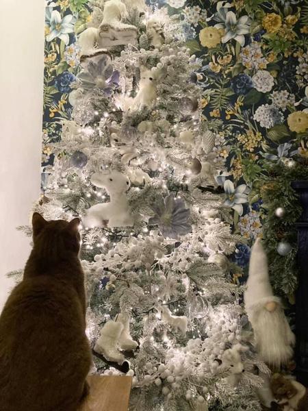 Фото №2 - Тест на внимательность: а вы сумеете найти кошку на фото?