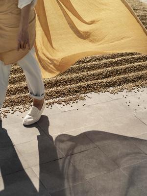 Фото №5 - Nespresso представили лимитрованную коллекцию блендов Master Origins