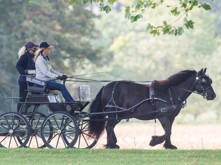 Фото №2 - Королевский досуг: хобби, объединившее графиню Софи и принца Филиппа