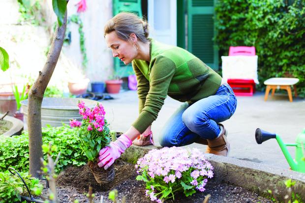 Фото №2 - Список дачника: что обязательно нужно сделать на огороде в начале мая