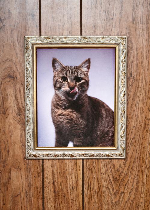 """Фото №1 - """"Умер кот. Как сказать ребенку?"""""""