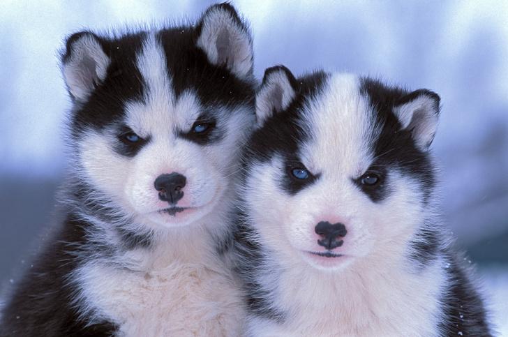 30 самых милых щенков