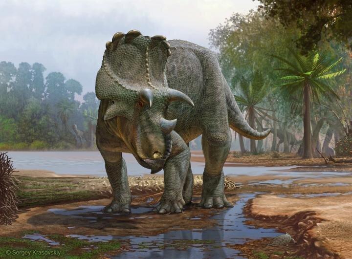 Фото №1 - Найден один из древнейших цератопсидов