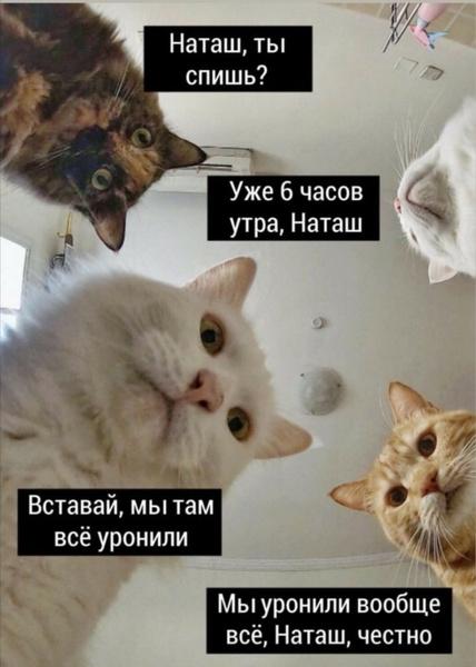 Фото №13 - 10 интернет-мемов, которые популярны только в России