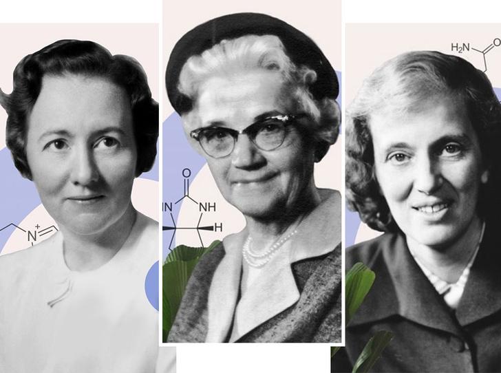 Фото №2 - «Для женщин— за женщин»: истории исследовательниц, стоявших у истоков открытия витаминов